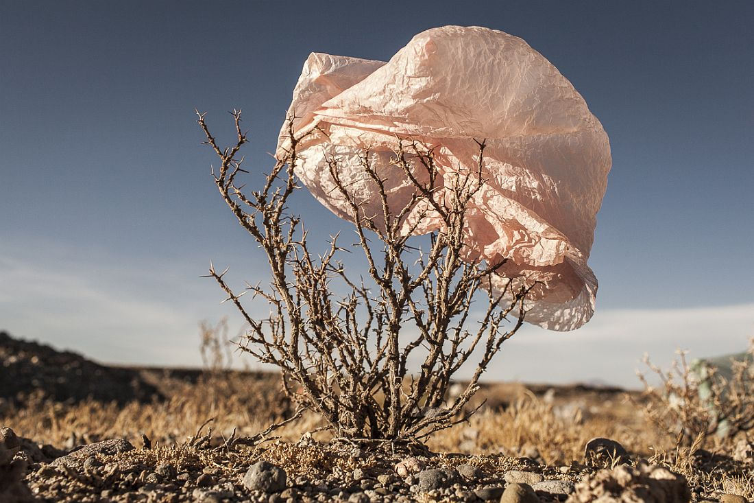 08/11/2014 - Uyuni, Bolivia:Plastic tree #21. Plastic bags are part of the landscape of the Bolivian Altiplano. The accumulation of plastic bags on the environment cause deterioration of the landscapes and agriculture soils and it is associated to the death of domestic and wild animals. The world consumes 1 million every minute, but the all useful plastic bag as become the main source of pollution worldwide. Since most of the plastic isn't biodegradable and it is a durable material it can last for hundreds of years in the environment. Plastic Trees series was made to call for the attention on this problem, focusing on the spreading of the plastic bags on the Bolivian Altiplano, where millions of bags travel with the wind until they got entangled in native bushes, damaging the beautiful landscapes.