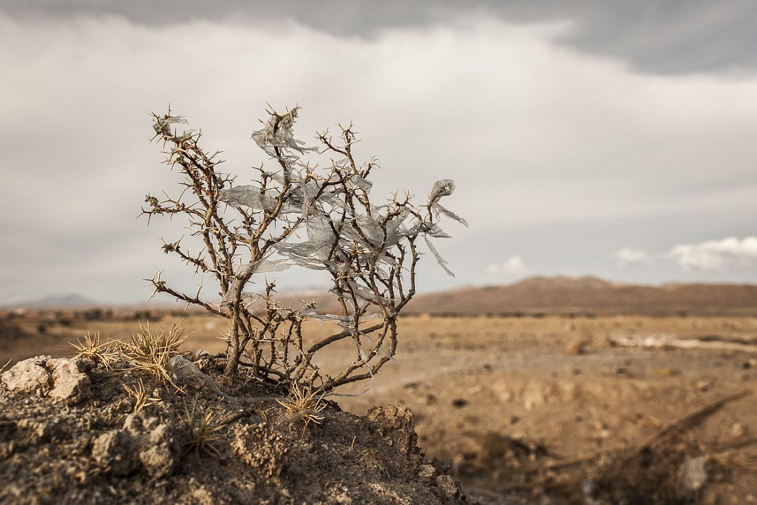 10/11/2014 - Uyuni, Bolivia: Plastic tree #38. Plastic bags are part of the landscape of the Bolivian Altiplano. The accumulation of plastic bags on the environment cause deterioration of the landscapes and agriculture soils and it is associated to the death of domestic and wild animals. The world consumes 1 million every minute, but the all useful plastic bag as become the main source of pollution worldwide. Since most of the plastic isn't biodegradable and it is a durable material it can last for hundreds of years in the environment. Plastic Trees series was made to call for the attention on this problem, focusing on the spreading of the plastic bags on the Bolivian Altiplano, where millions of bags travel with the wind until they got entangled in native bushes, damaging the beautiful landscapes.