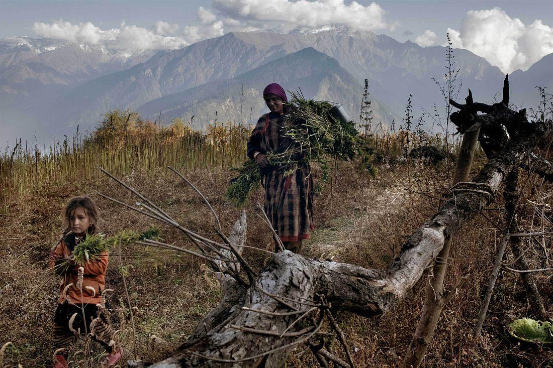 andrea-de-franciscis-himalayas-outlawed-marijuana-fields-05