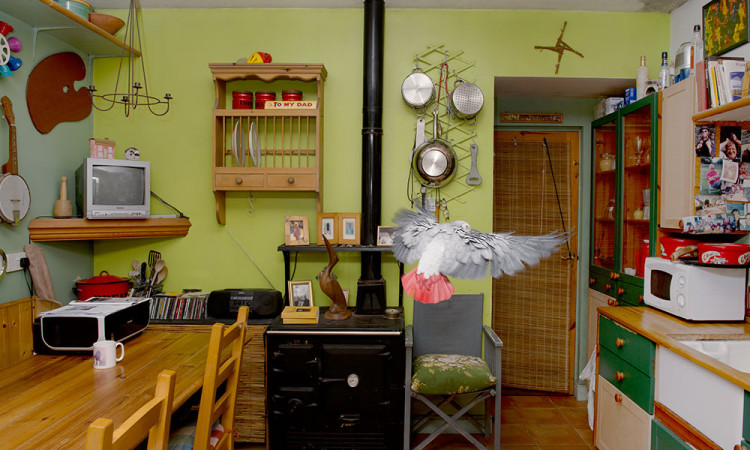 Rachel Glass: The Domestic Aviary