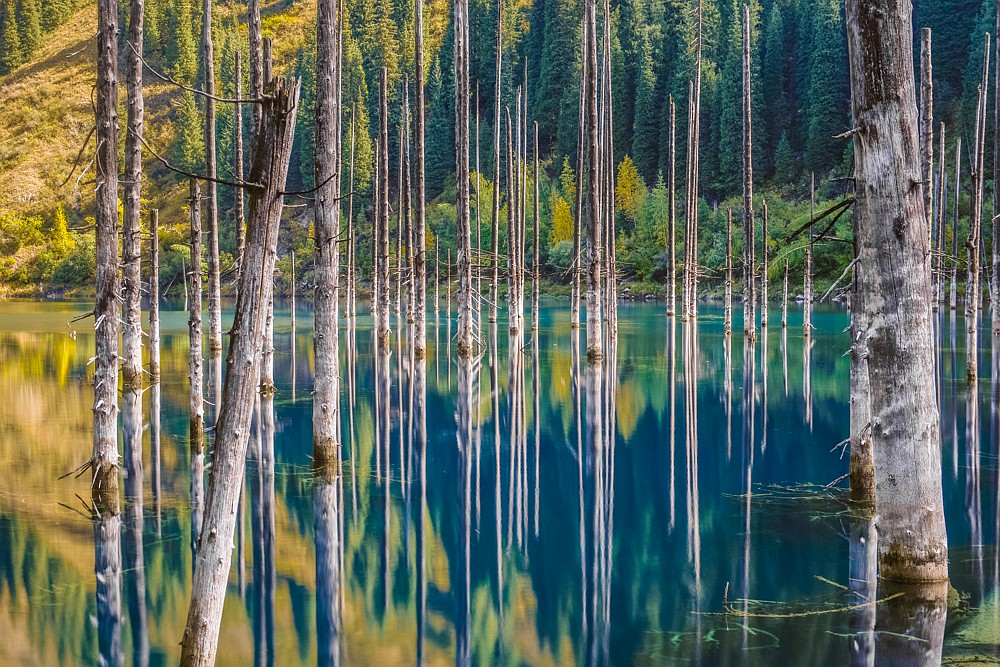 Spruces emerging from a mountain lake, Kazakhstan