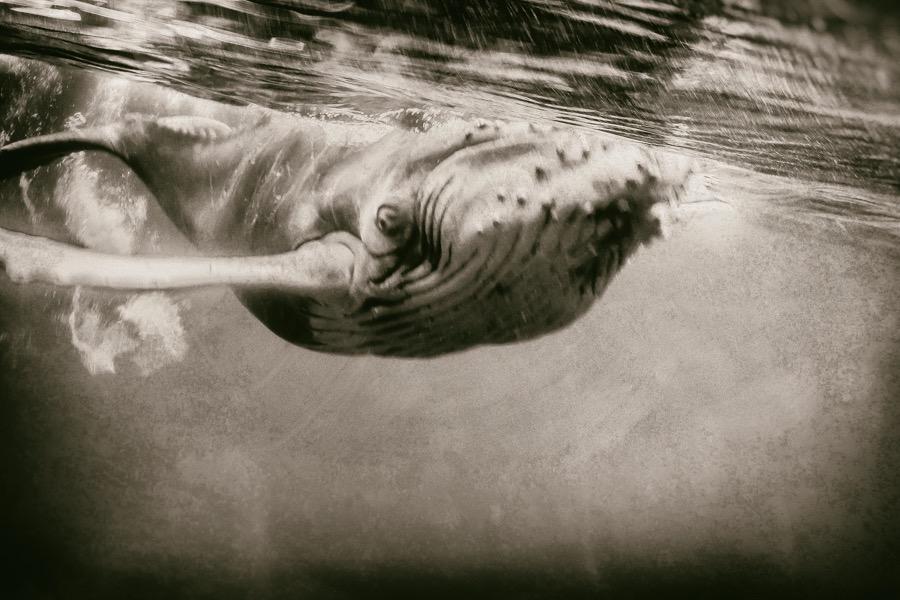 Wildlife_Animals_Amateur_1st_place_Jose_Javier_Delgado_Esteban