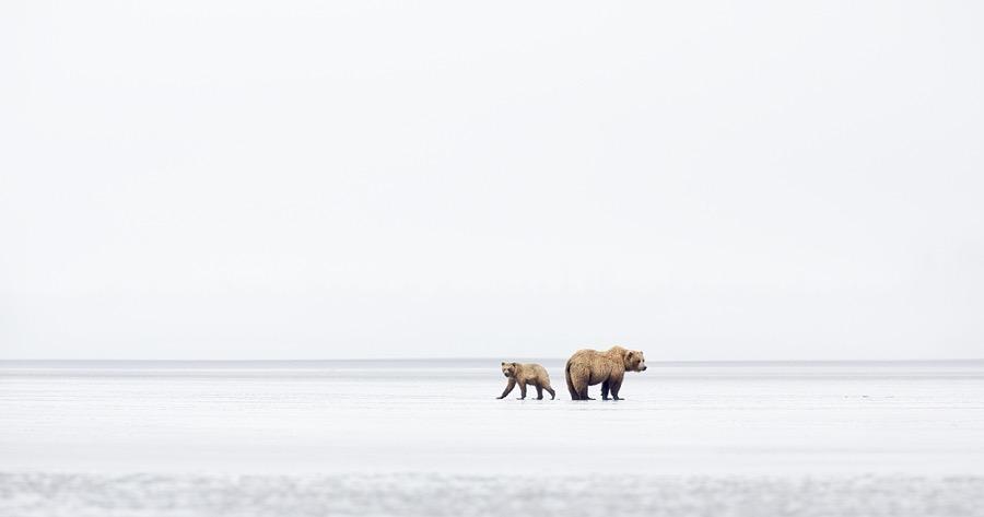 Wildlife_Animals_Professional_1st_place_Richard_Garvey-Williams