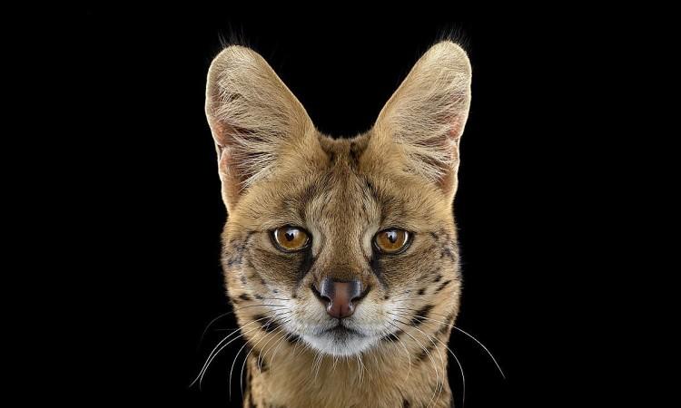 Brad Wilson: Wild Life