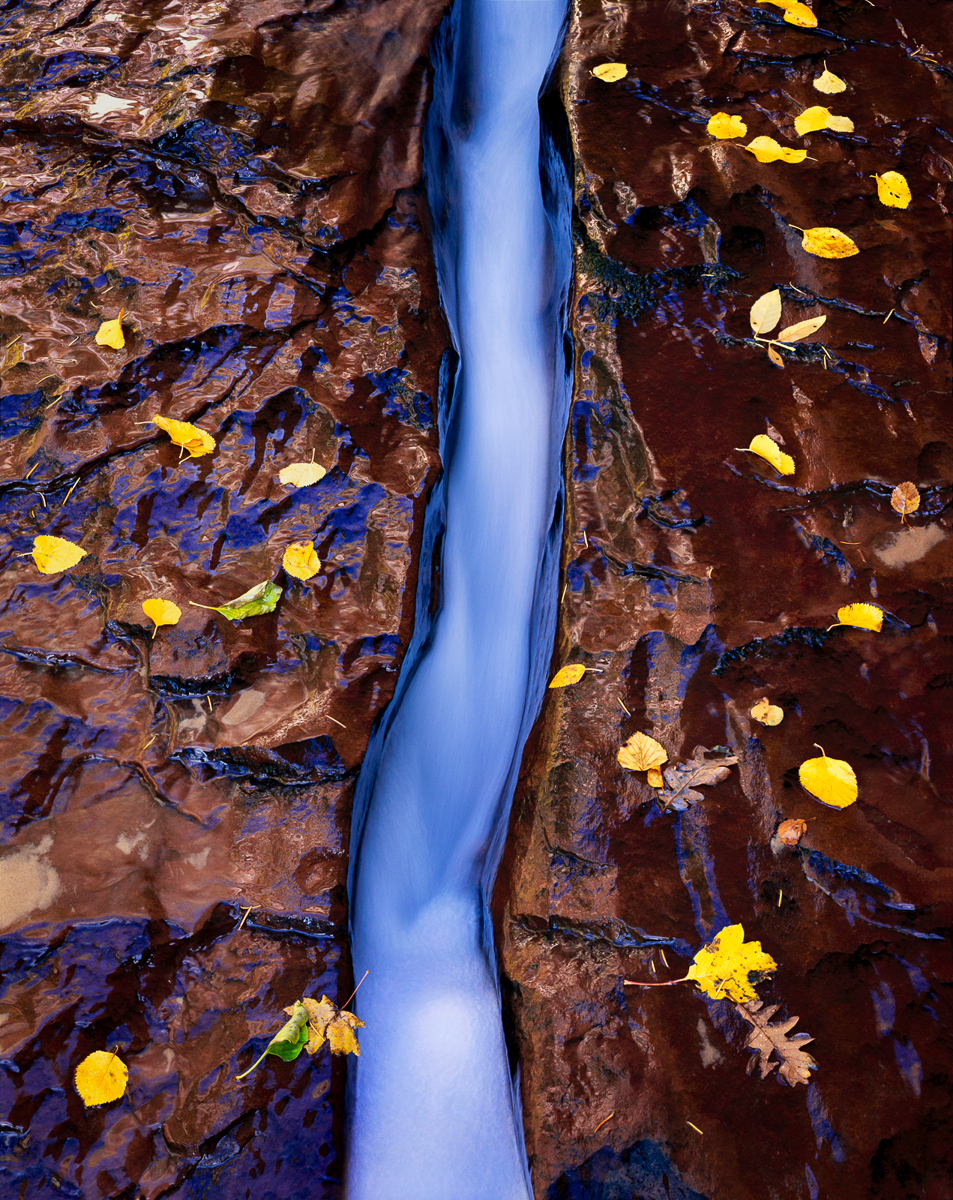 Left Fork North Creek,  Zion National Park, Utah