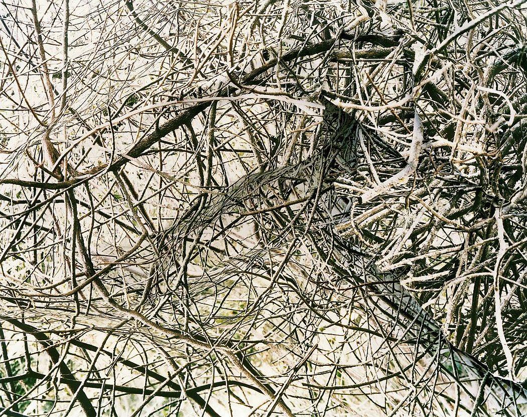 laura-plageman-coneptual-landscapes-04