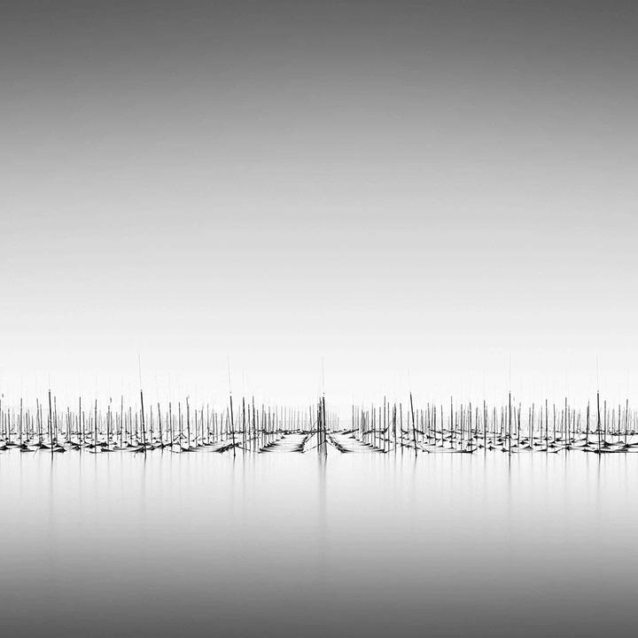 © Michael Levin