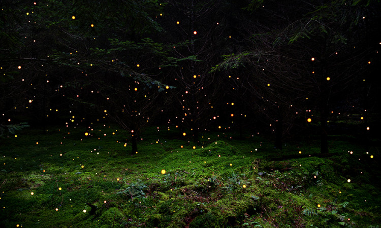 Ellie Davies: Stars – Forrest Landscapes with Stars from Far Away