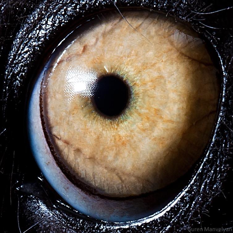 Lemur Catta © Suren Manvelyan