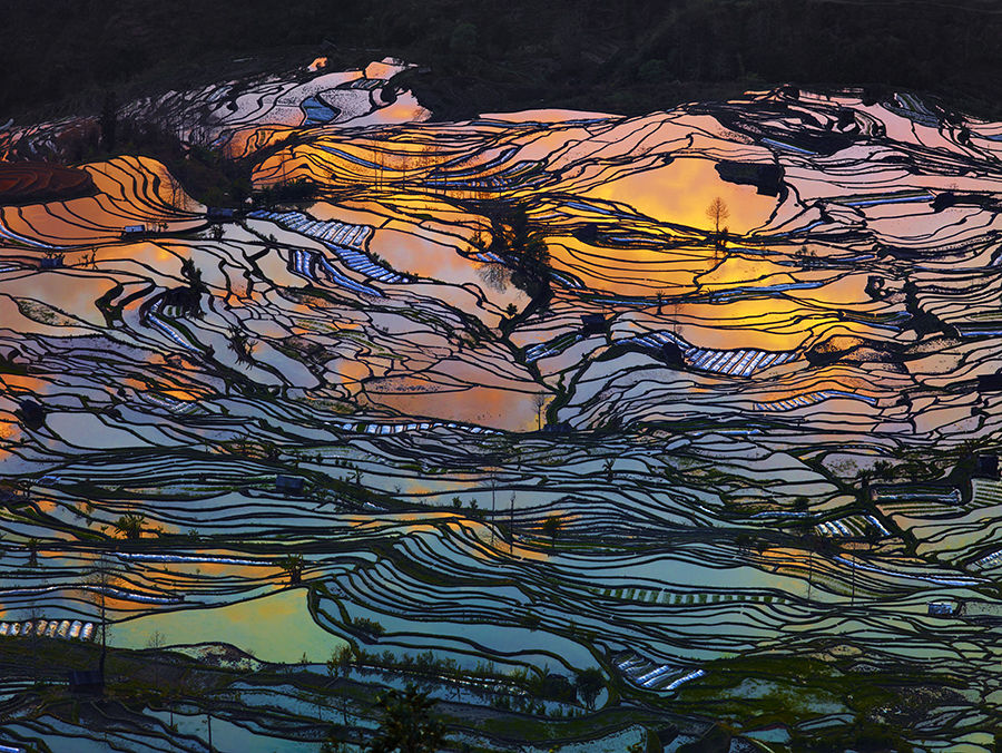 International Nature Photographer of the Year 2015 - Thierry Bornier (China): Beauty Paddy of China (Nature: Landscapes, 1st Place, Professional)