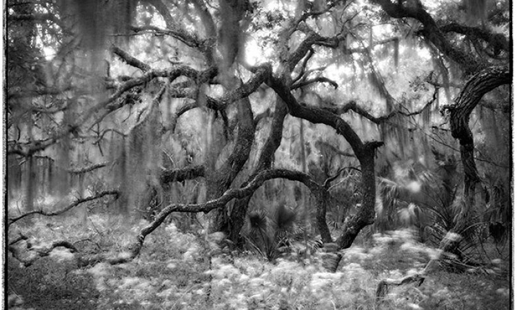 Diane Kirkland: Georgia Landscapes in Black and White