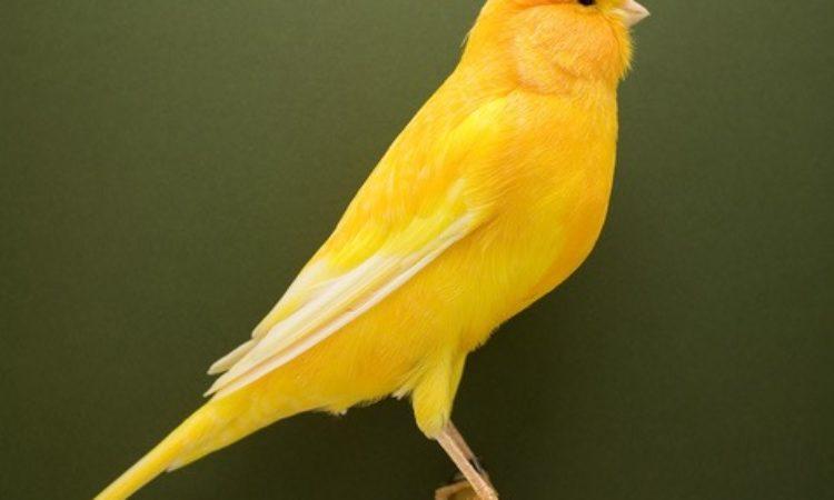 Luke Stephenson: Show Birds