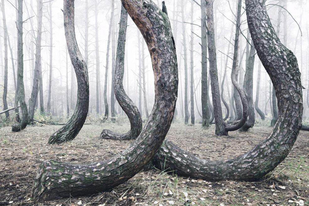The Crooked Forest © Kilian Schönberger