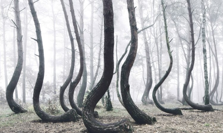 Kilian Schönberger: The Crooked Forest