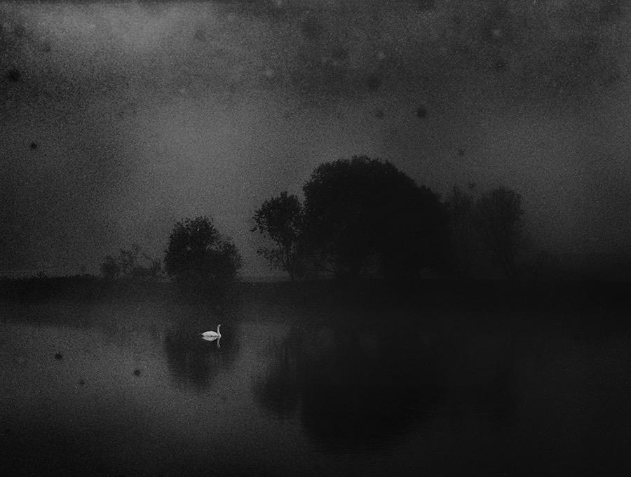 Black fea, white hope by Harauski Yauheni