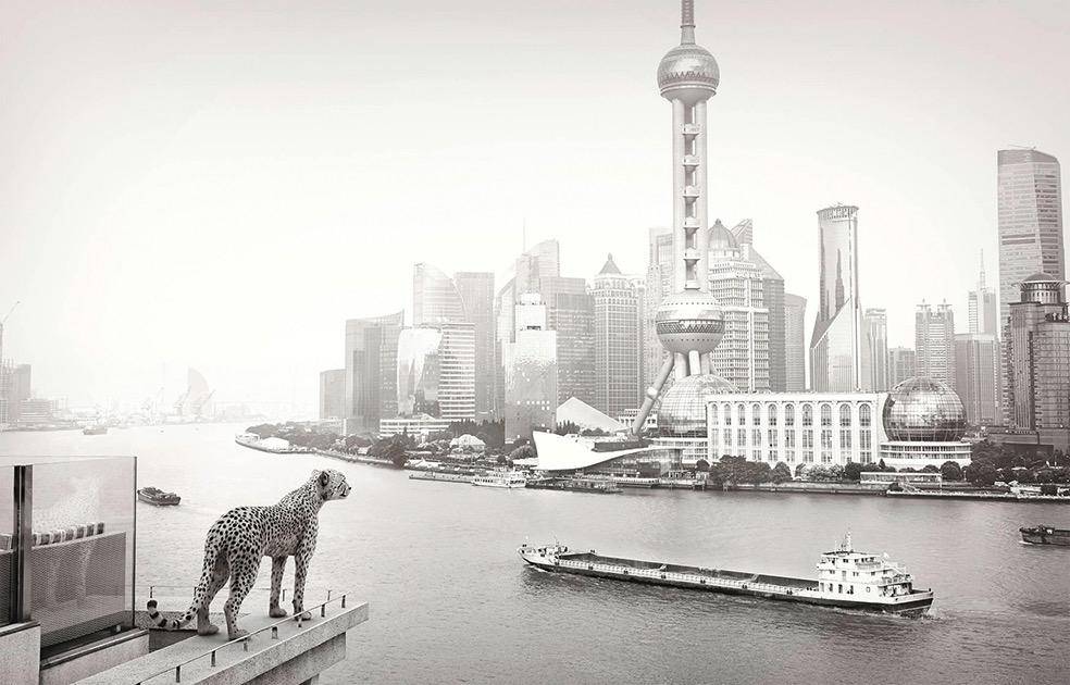 Lost Animals © Tom Nagy