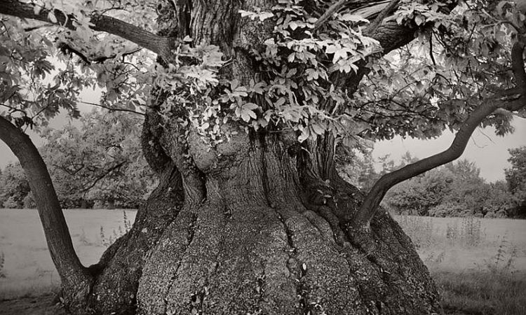 Beth Moon: Ancient Trees