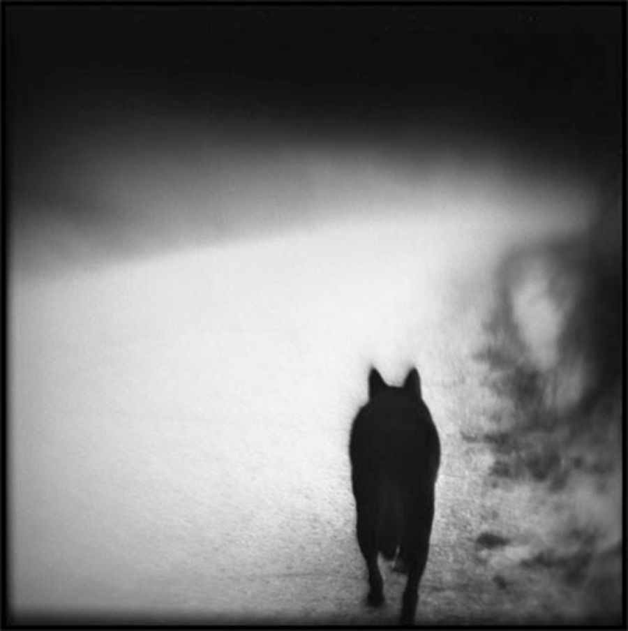 © Susan Burnstine: Within Shadows