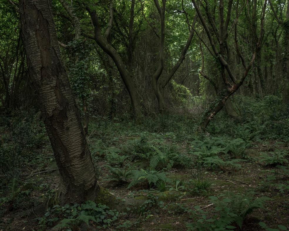 Tamina Florentine Zuch G 252 R Orman A Thick Forest