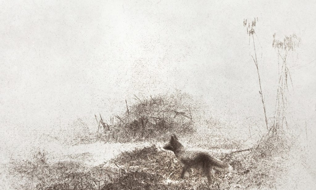 Alyssa Salomon: Animal Land