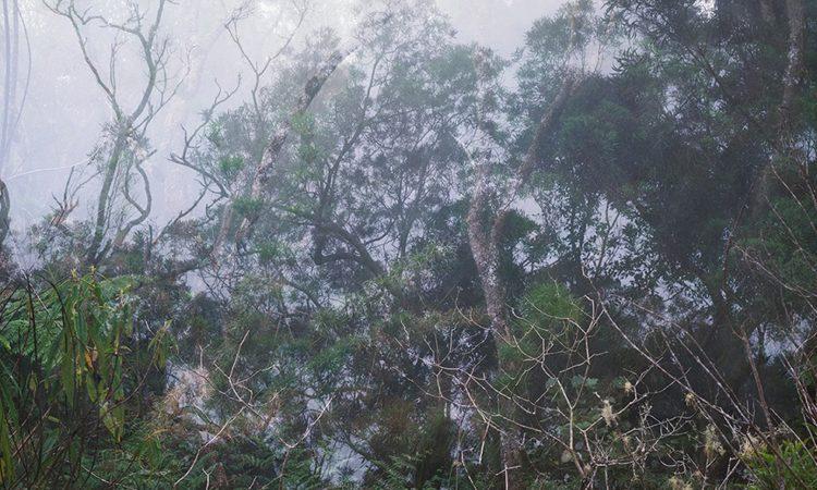 Muriel Vega: Réflexion – Forest