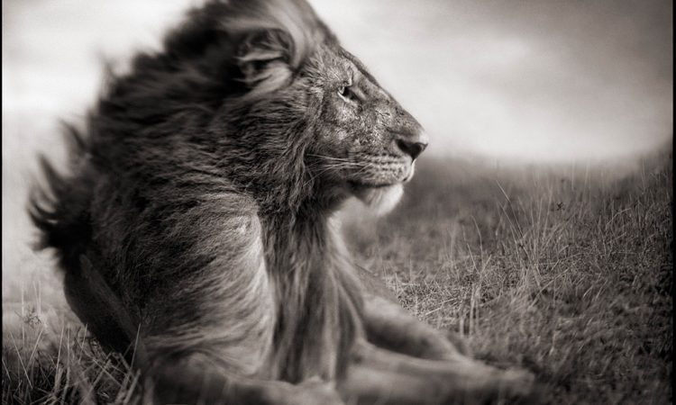 PhotoBiography: Nick Brandt
