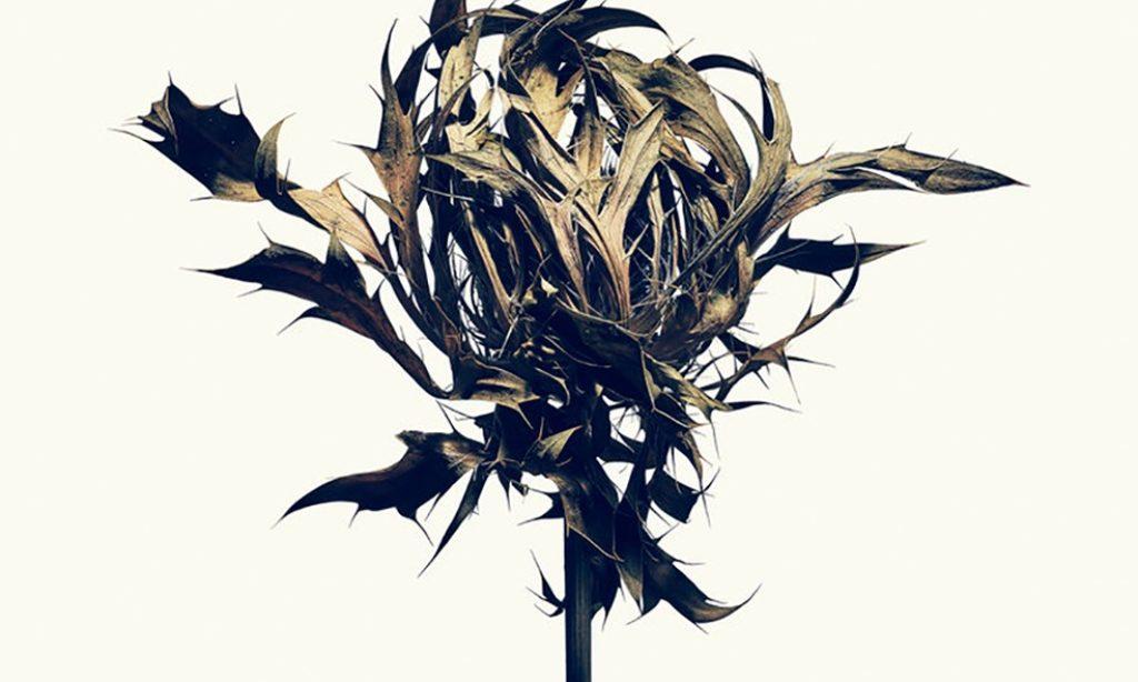 Isamu Sawa: Without Water – Photo Exhibition at Black Eye Gallery