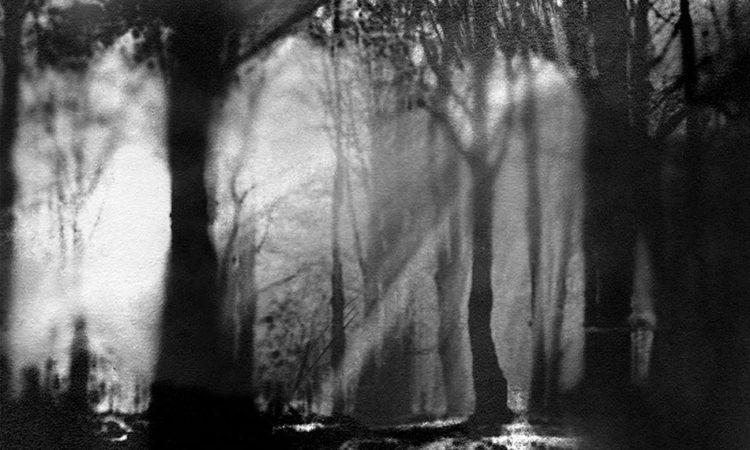 Carla Shapiro: To Capture a Shadow