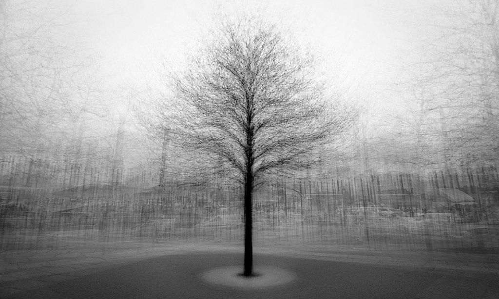 Frank Machalowski: Stadtbaum